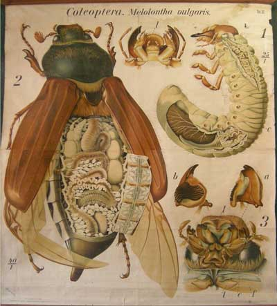Colección de los Gabinetes de Ciencias del Antiguo Instituto de Santiago