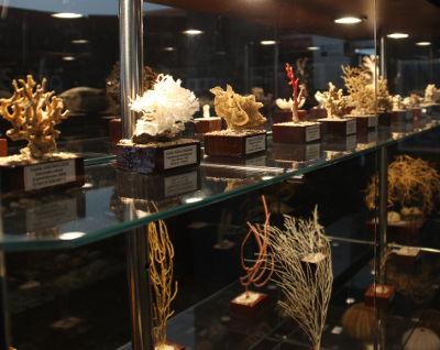 Cedeira Seas Museum