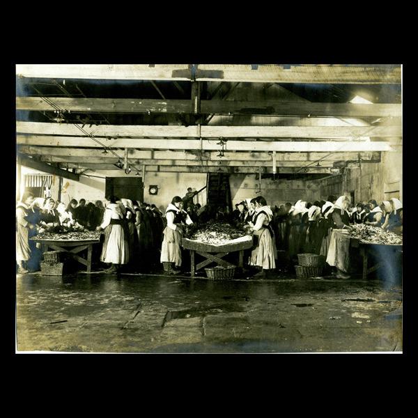 Mulleres na fábrica de conservas limpando as sardiñas