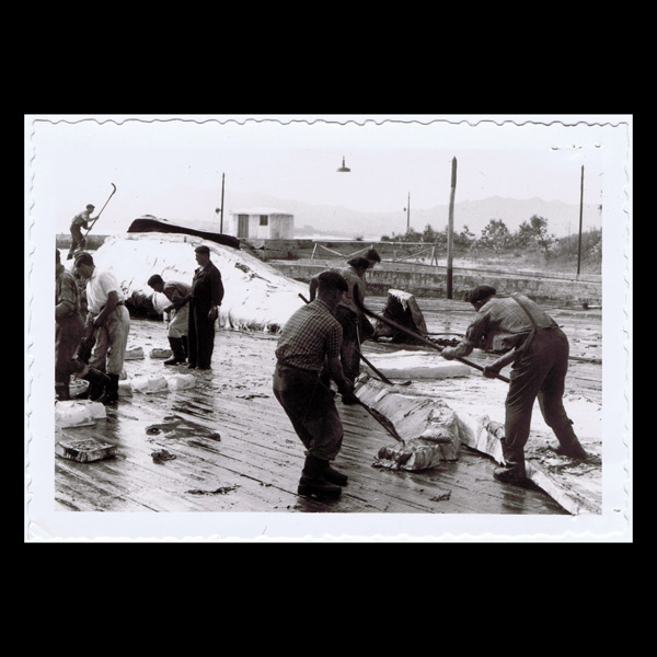Cutting up of a whale on the platform of the Cangas whaling factory